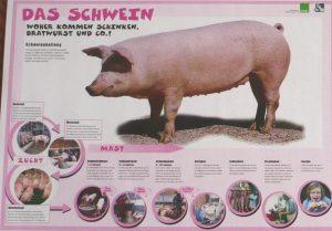 """Poster """"Das Schwein"""" von information.medien.agrar"""