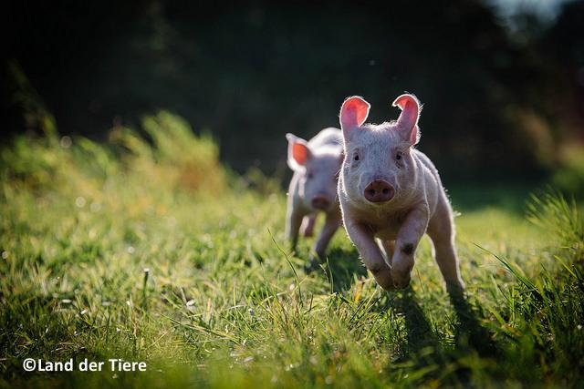 Projekttag Tiere in der Landwirtschaft für FÖJler und BFDler