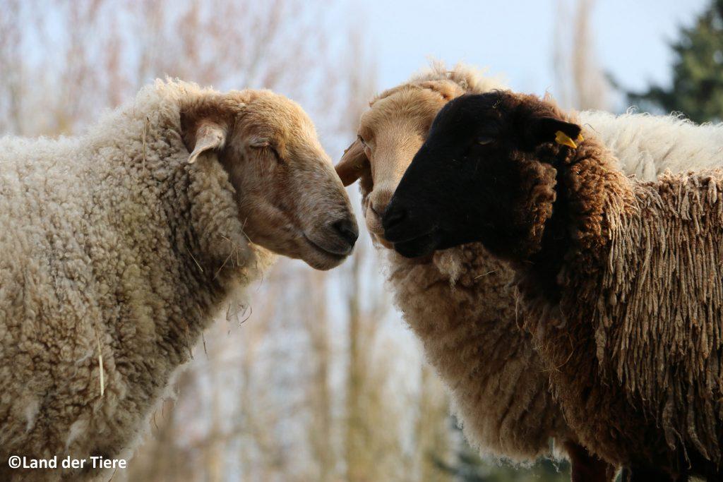 Projekttag Tiere in der Landwirtschaft für Jugendtreff und Jugendgruppen