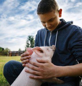 """Die Teilnehmenden des Projekttags im Land der Tiere lernen verschiedene Tiere, die in der Landwirtschaft als """"Nutztiere"""" gelten, kennen."""