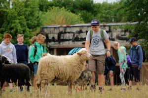 Schüler und Schafe im Land der Tiere