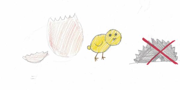 Zeichnung Kükenschreddern